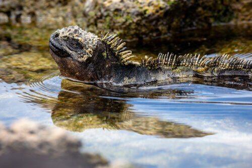 Galapagos Adaları'nda vahşi yaşam