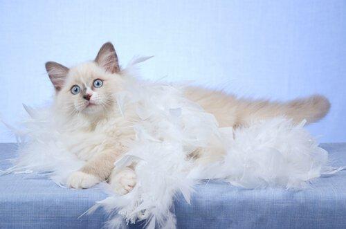 Kedilerde Tüy Dökme Hakkında Bilmeniz Gerekenler