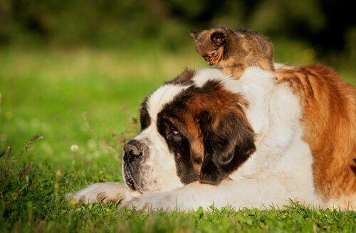 yaşlı ve yavru köpek