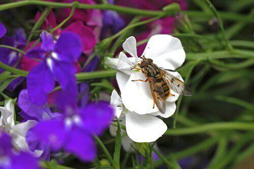 çiçeğe konmuş arı