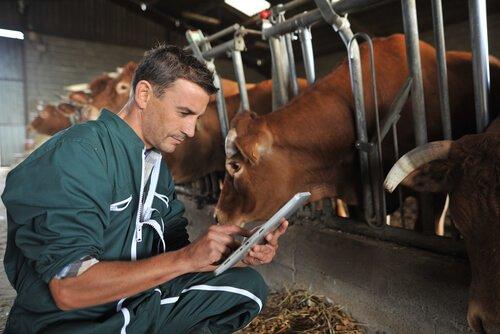 Antiparaziter İlaçların Sığırlarda Uygulanması