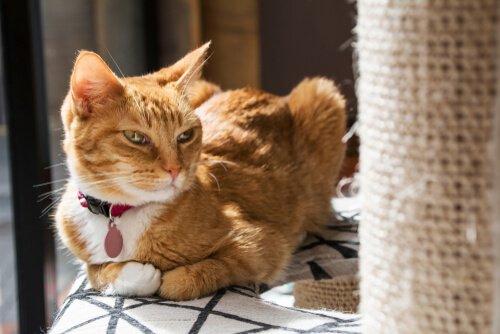 Tırmalama Tahtaları: Kedimin Neden İlgisini Çekmiyor?