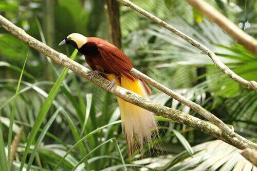 Cennet Kuşları: Türleri ve Özellikleri