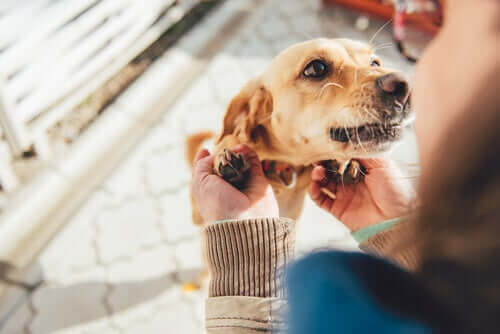 Köpekler Aile Üyelerini Nasıl Tanır?