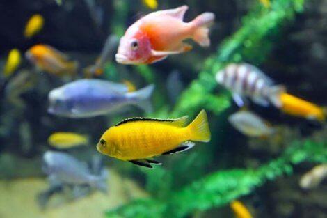 Akvaryum balıkları oldukça hassas canlılar.