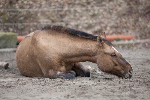 Atlarda Kolik Hastalığı Türleri