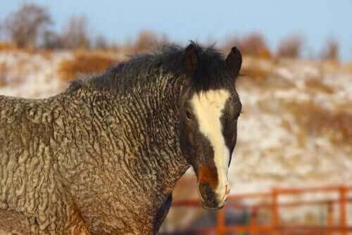 Başkır Atı: Gizemli ve Hipoalerjenik
