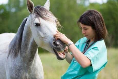 bakımı yapılan beyaz at ve veteriner