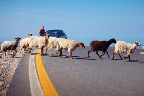 Yoldan geçen bir grup çiftlik hayvanları ve vahşi yaşam mensupları.