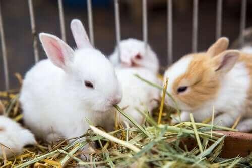 Bir Tavşanı Besleyebileceğiniz Bitkiler