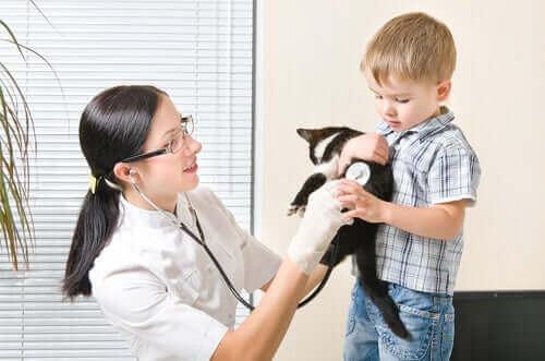 hasta kedi ve hipoalerjenik köpek mamaları