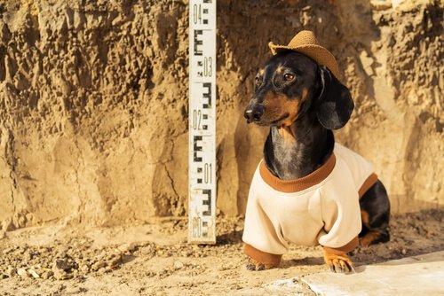 İnsanoğlu ve Köpekler: Taş Devrinden Bugüne