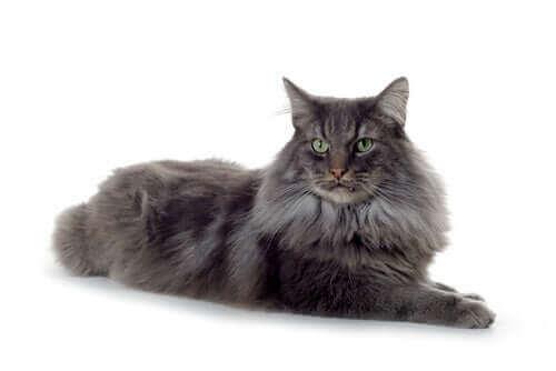 Kediler tarih boyunca önemli roller taşımış