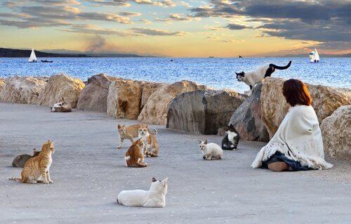 Kedi Kolonileri: Neden Kontrol Edilmeli