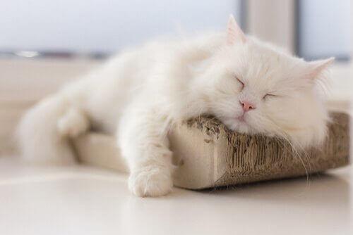 Kedilerde İdrar Yolu Enfeksiyonu ile Mücadele
