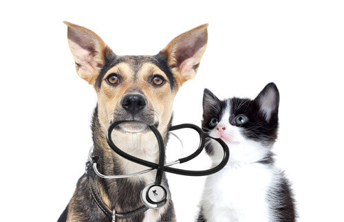 veteriner kontrolü