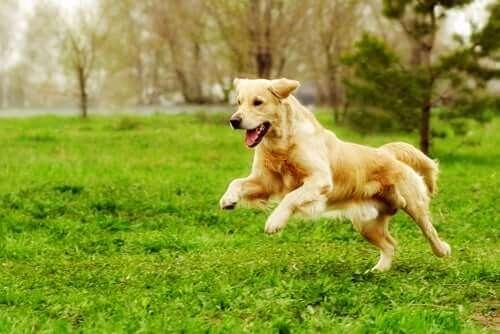 Köpeğinizi Şekle Sokacak Fiziksel Aktiviteler