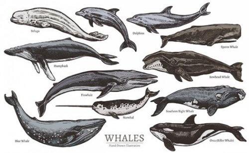 Memeli Deniz Hayvanları Türleri ve Sınıflandırması