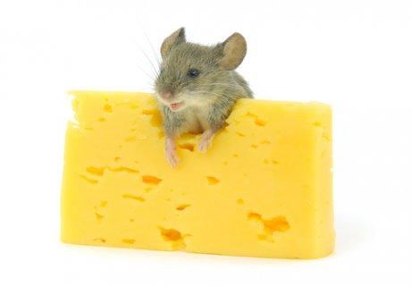 peynir yiyen fare