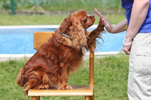 Köpek Eğitimi Verirken Uymanız Gereken 10 Kural