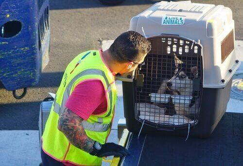 Taşıma kutusundaki bir köpek.