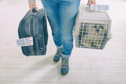 Köpeğinizle uçak yolculuğuna giderken