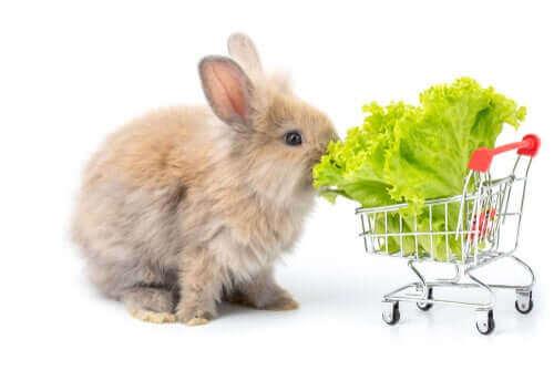 Yapraklı sebzeler veya sebzelerin yaprakları tavşanlar için en harika besin kaynakları.