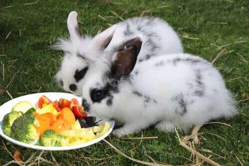 Bahçenizdeki her ot tavşanınız için güvenli değil.