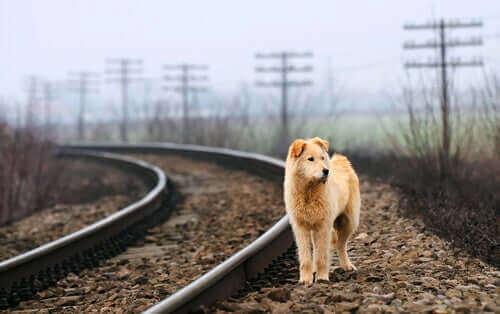 Bir Hayvanı Kurtarmak İçin Dikkat Edeceğiniz 7 Şey