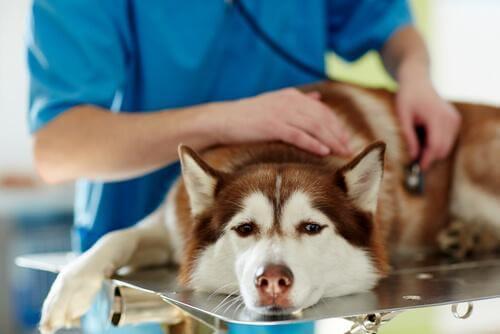 veteriner köpek muayene