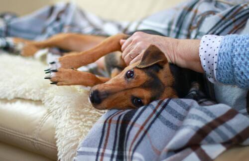 yaşlı kadının kucağında yatan köpek