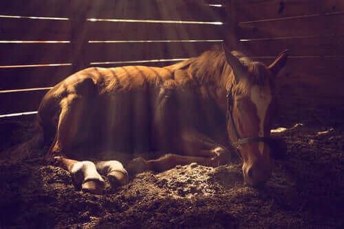 ahırda yatan at ve atlarda görülen cilt problemleri