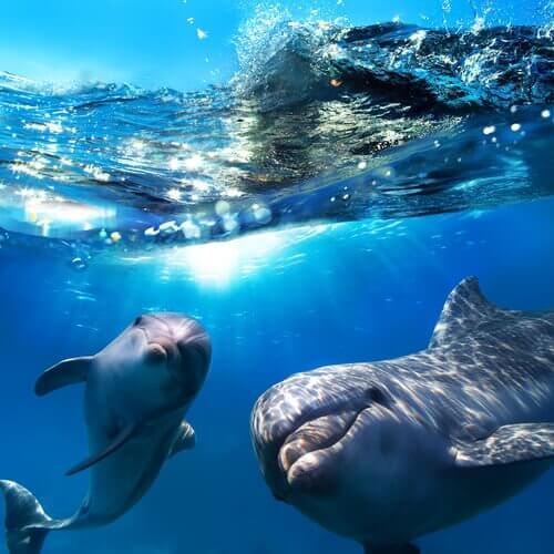 yunuslar deniz altı
