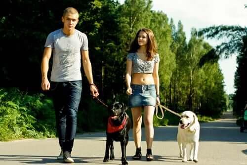 köpek yürüten kadın ve adam