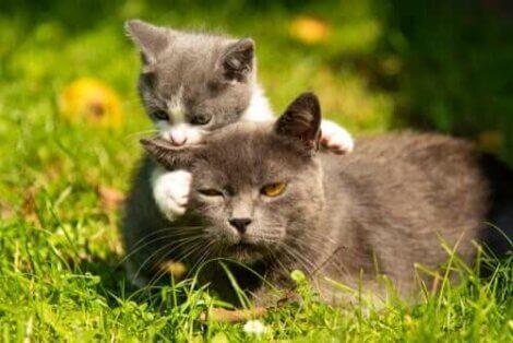yavrusuyla oynayan anne kedi