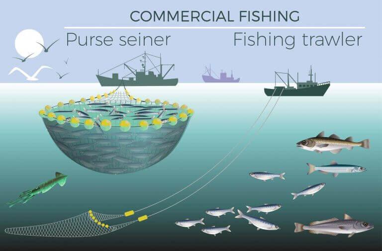 balıkçılık ekonomisi