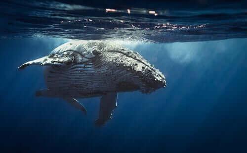 deniz memelileri ve balina