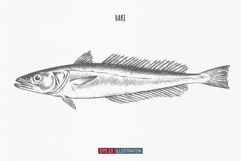 berlam balığı çizimi