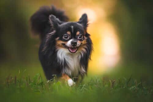 Köpeklerde Böcek Isırıkları: Korunma Yöntemleri