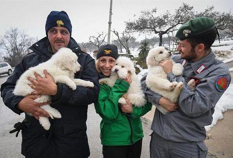 Çığ Altında Kalan Otelden Üç Yavru Köpek Kurtuldu