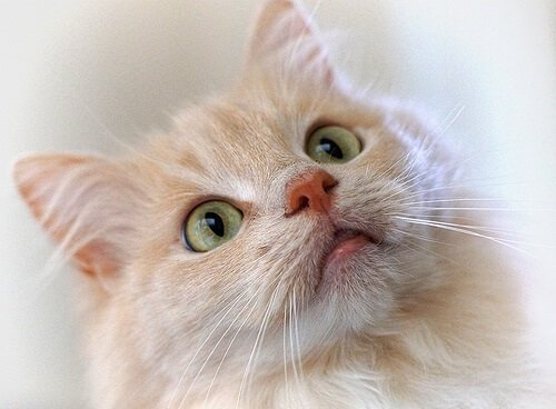 Clicker Kullanarak Kedi Eğitmek