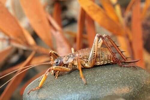 Weta: Dünyanın En Büyük Böceklerinden Biri