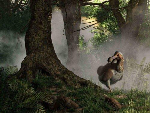 Dodo Kuşu: Nesli Tükenen Bir Türün Hikayesi