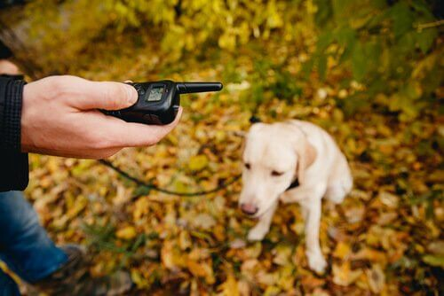 köpek eğitmek