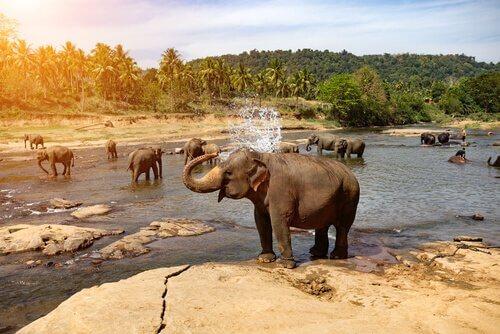 yıkanan filler