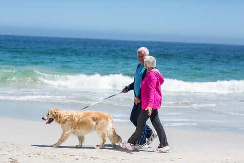 golden ile sahilde yürüyen çift