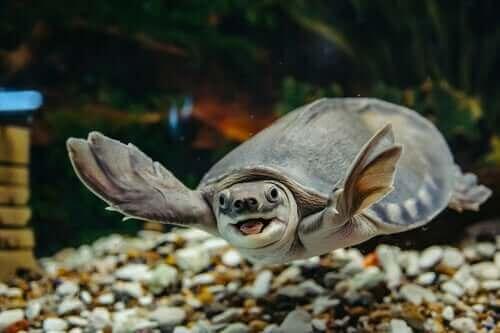 Su Kaplumbağası Bakımı Nasıl Olmalı?