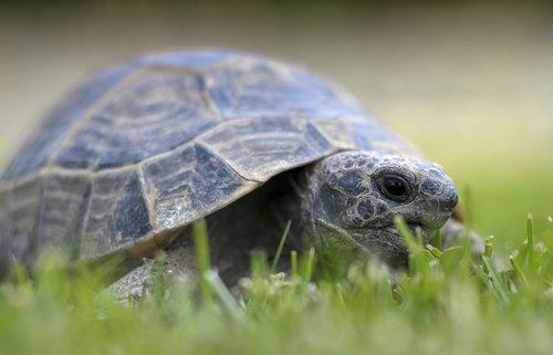 kaplumbağa yetiştirmek