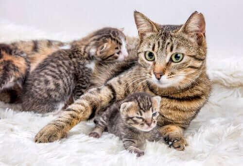 Kedi Yavrularını Taşımak