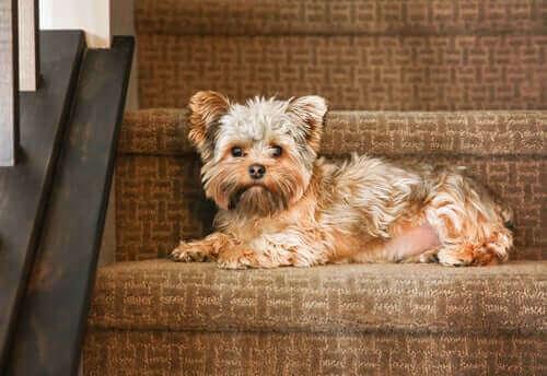 merdivenlerde oturan köpek